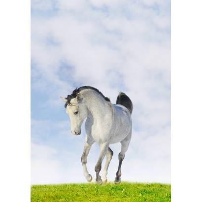 Фотообои Лошадь | арт.16200