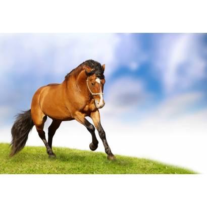 Фотообои Лошадь | арт.16201