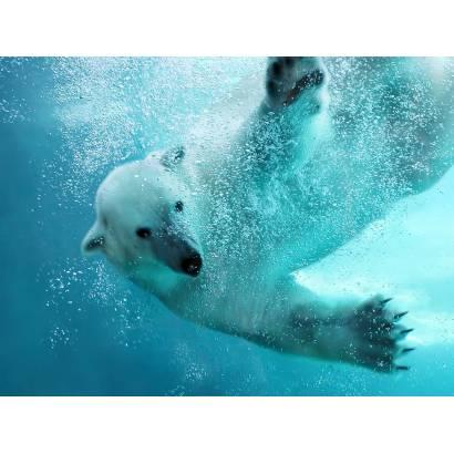 Фотообои Белый Медведь | арт.16205