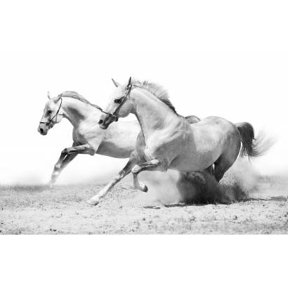 Фотообои Лошади | арт.16206