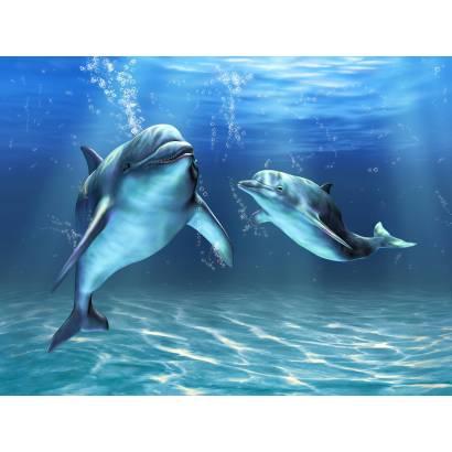 Фотообои Дельфины | арт.16207