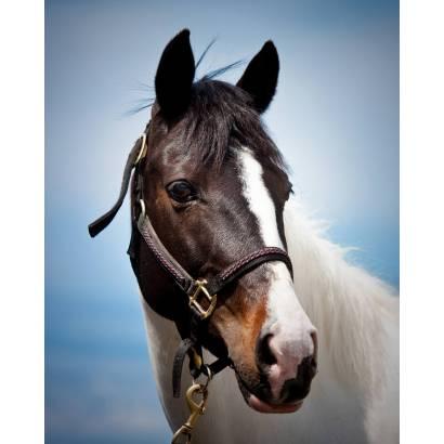 Фотообои Лошадь | арт.16208