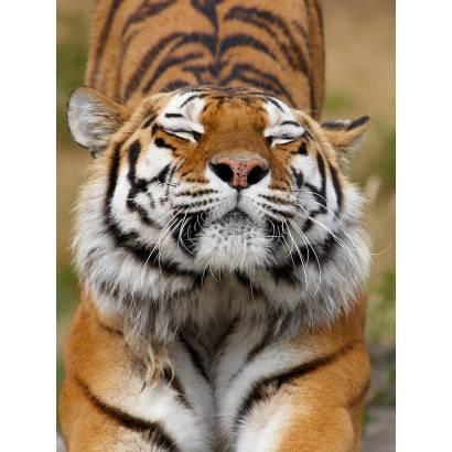 Фотообои Тигр | арт.16219