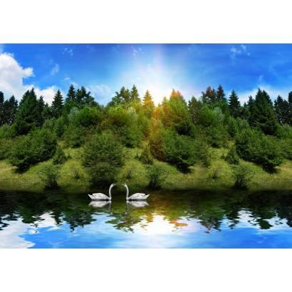 Фотообои Лебеди | арт.16226