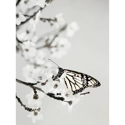 Фотообои Бабочка | арт.16235