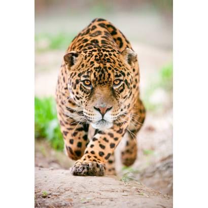 Фотообои Леопард | арт.16239