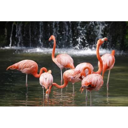 Фотообои Фламинго | арт.16240