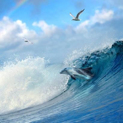 Фотообои Дельфины | арт.16242