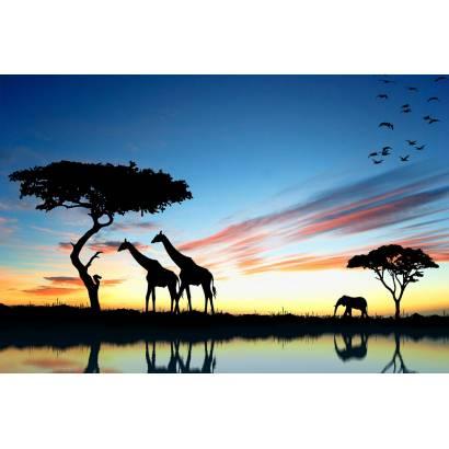 Фотообои Африка | арт.16244