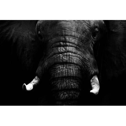 Фотообои Слоны | арт.16248