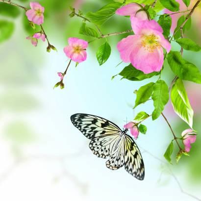 Фотообои Бабочка | арт.16251