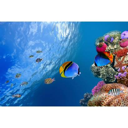Фотообои Кораллы | арт.16252