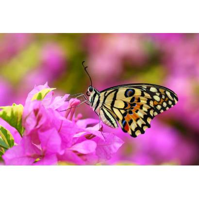 Фотообои Бабочка | арт.16253