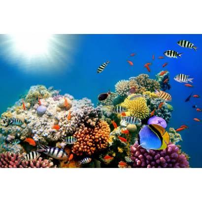 Фотообои Кораллы | арт.16254