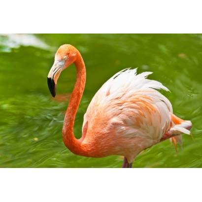 Фотообои Фламинго | арт.16260