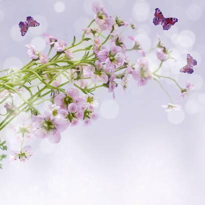 Фотообои Бабочка | арт.16261