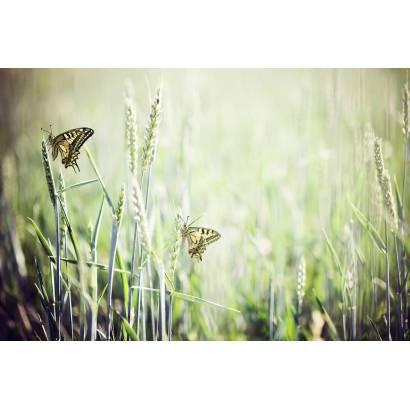 Фотообои Бабочка | арт.16267