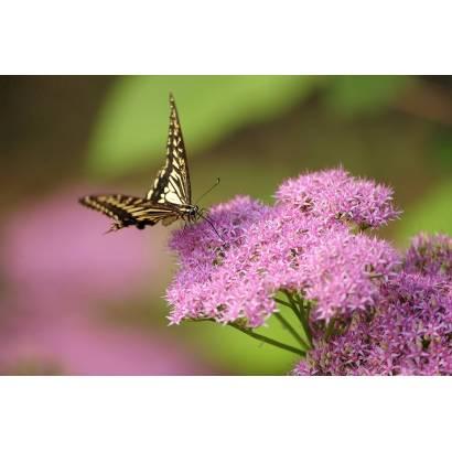 Фотообои Бабочка | арт.16268