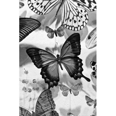 Фотообои Бабочка | арт.16270