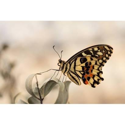 Фотообои Бабочка | арт.16271