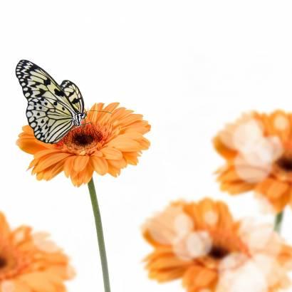 Фотообои Бабочка | арт.16272
