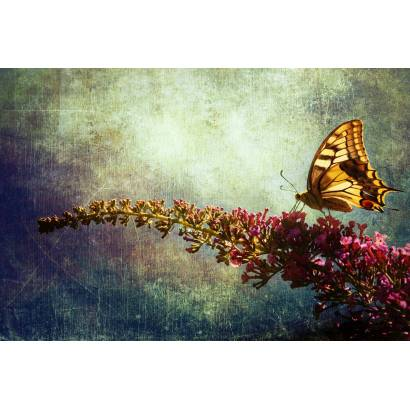 Фотообои Бабочка | арт.16273