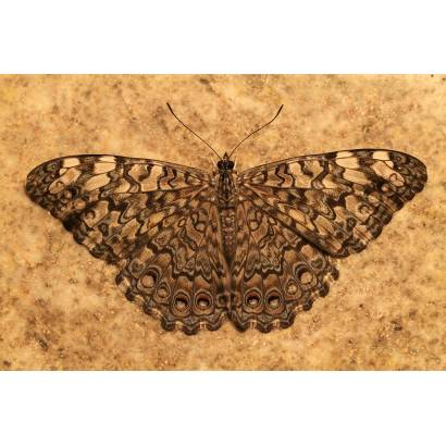 Фотообои Бабочка | арт.16274