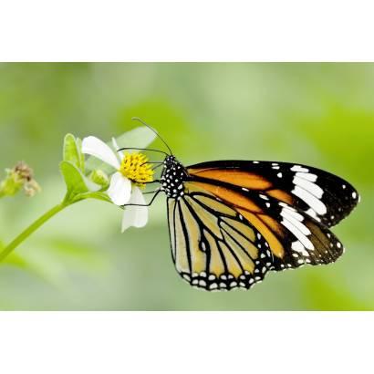 Фотообои Бабочка | арт.16275