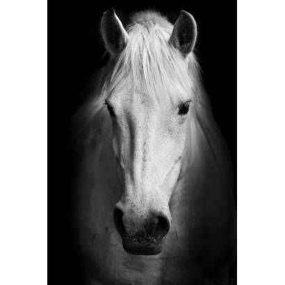 Фотообои Конь | арт.16276