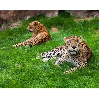 Фотообои Леопарды | арт.16278