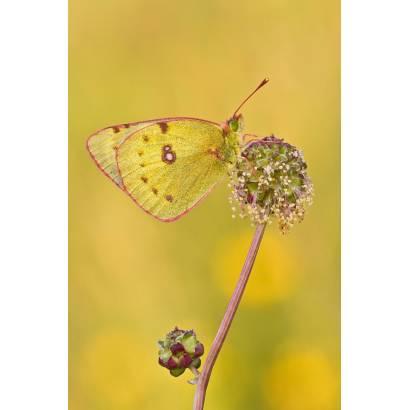 Фотообои Бабочка | арт.16280