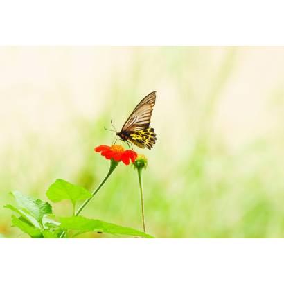 Фотообои Бабочка | арт.16282