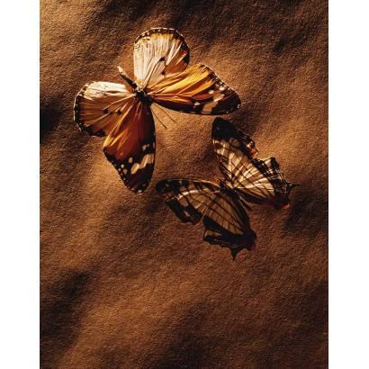 Фотообои Бабочка | арт.16283