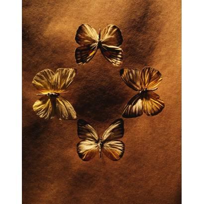 Фотообои Бабочка | арт.16284