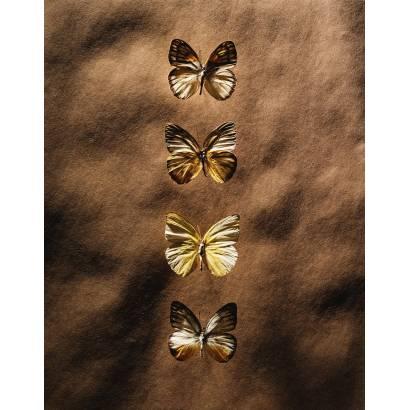 Фотообои Бабочка | арт.16285