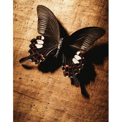Фотообои Бабочка | арт.16286