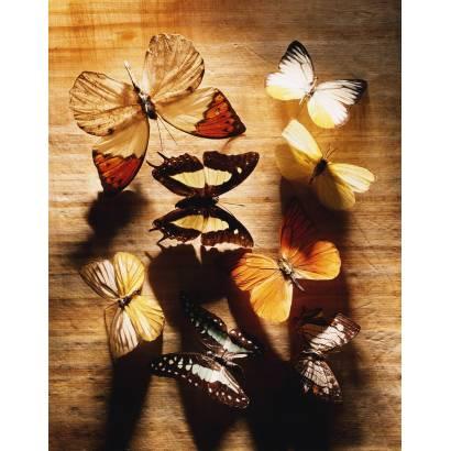 Фотообои Бабочка | арт.16287