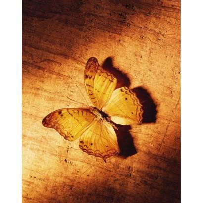 Фотообои Бабочка | арт.16288
