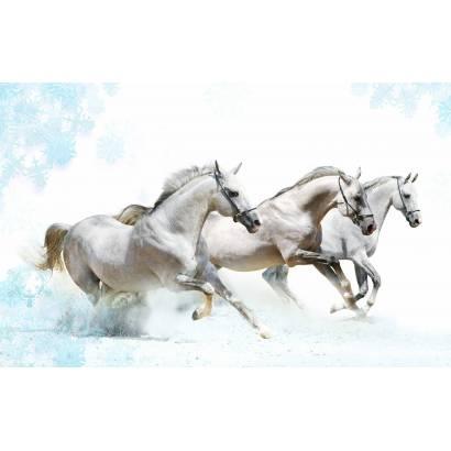 Фотообои Лошадь | арт.16291