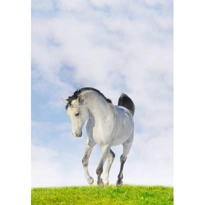 Фотообои Лошадь | арт.16292