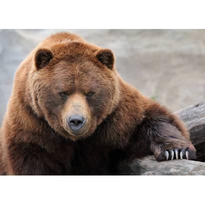 Фотообои Медведь | арт.16295