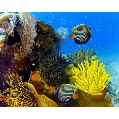 Фотообои Подводный мир | арт.16301