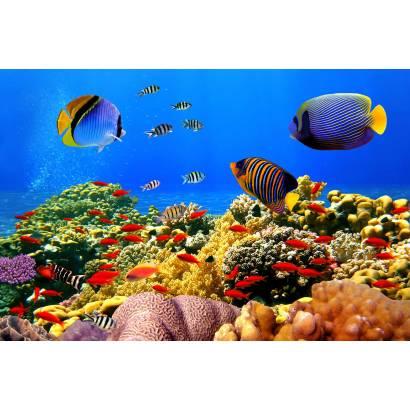 Фотообои Подводный мир | арт.16302