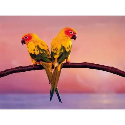 Фотообои Попугайчики вектор | арт.16304