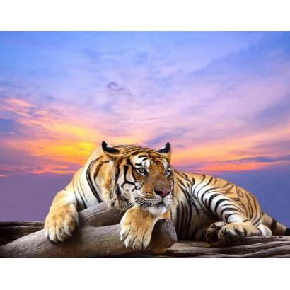 Фотообои Тигр на фоне закатного неба | арт.16305