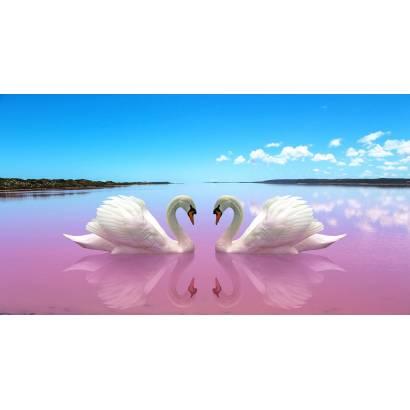 Фотообои Пара лебедей | арт.16310