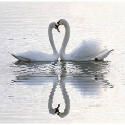 Фотообои Пара лебедей | арт.16311