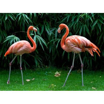 Фотообои Фламинго | арт.16312
