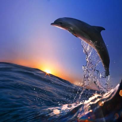 Фотообои Дельфин | арт.16313