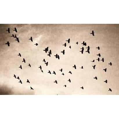 Фотообои Птицы в полёте | арт.16314